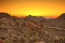 Sonoran Desert Before Dawn