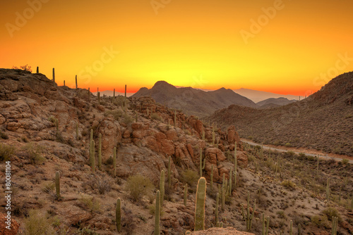 Deurstickers Arizona sonoran desert before dawn