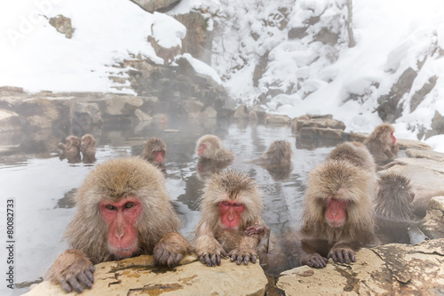Foto op Aluminium Aap みんなで温泉 おさるさん。snow monkey of the outdoor bath