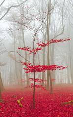 FototapetaZauber Wald in rot und weiß