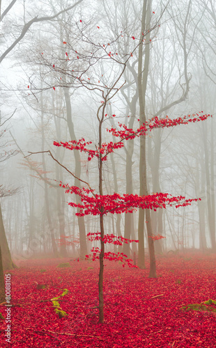 Zauber Wald in rot und weiß