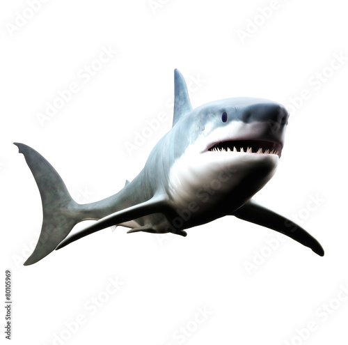 Fotografie, Obraz  Great white shark swimming on a white background