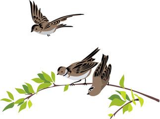 Naklejka Do sypialni Sparrows with a winter sale tag
