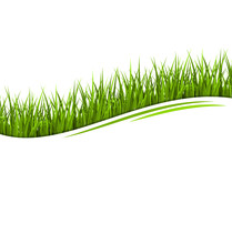 Green Grass Lawn Wave Isolated On White. Floral Eco Nature Backg