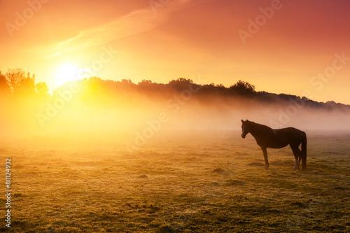Naklejka premium konie pasące się na pastwisku