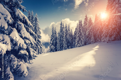 Amazing winter landscape