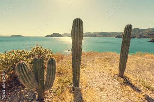 Keuken foto achterwand Cactus Cactus in Mexico