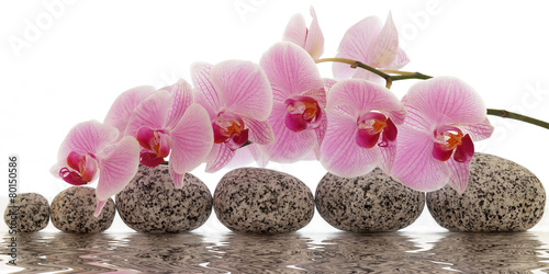 Photo Stands Orchid Orchidee mit Wasserspiegelung