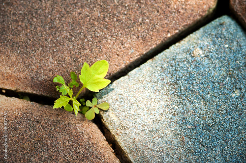 Photo  plant growing through crack in pavement Concept of business brea