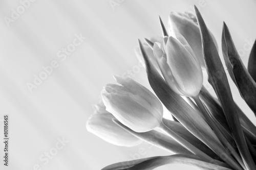 Fototapeta Beautiful tulips in black and white obraz na płótnie