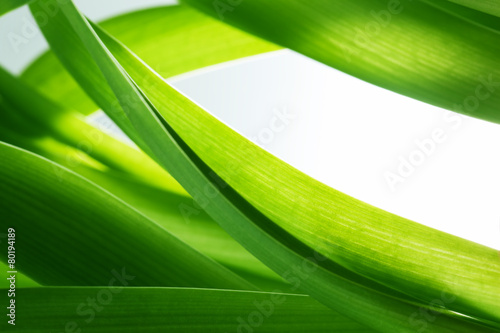 Green grass, plants background, white copy-space. - 80194189