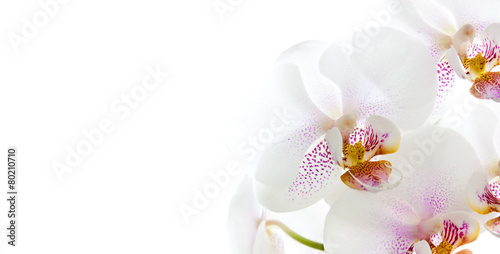 Tuinposter Orchidee isolierte Orchideenblüten