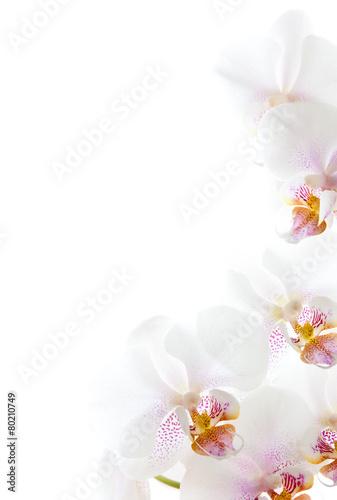 biale-kwiaty-orchidei-na-bialym-tle