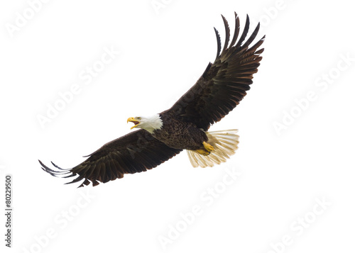 American Bald Eagle in Flight Wallpaper Mural