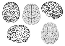 Black And White Cartoon Human Brains
