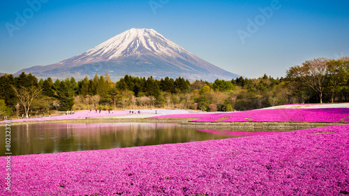 moss phlox with mount fuji in background Tableau sur Toile