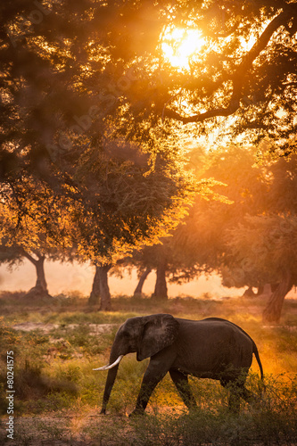 Photo Stands South Africa Elephant