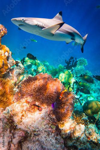 Foto op Canvas Onder water Tropical Coral Reef.