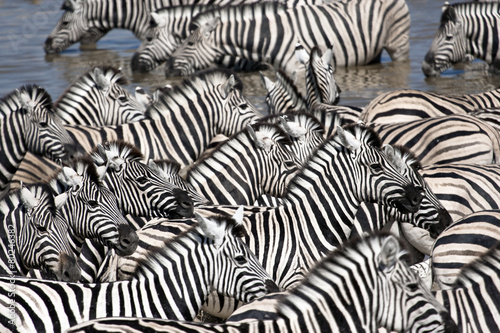 Cadres-photo bureau Zebra Zebra Head