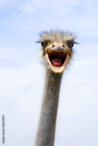 Staande foto Struisvogel funny ostrich