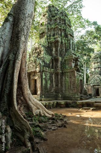 In de dag Bedehuis The ruins of Ta Prom Temple, Angkor Historical Park, Cambodia.