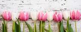 Fototapeta Tulipany - Blumen