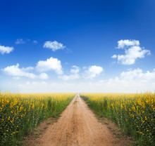 Dirt Road Into Yellow Flower F...
