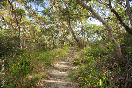 Fototapeta  Bushwalking in Jervis Bay National Park