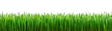 Perfect Grass Isolated For Spr...