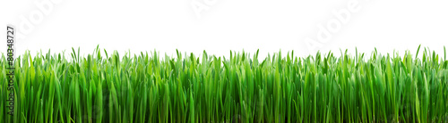 Tuinposter Gras perfect grass isolated for spring border