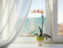 Orchids In Pot On Sunny Window Sill