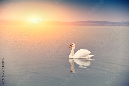 Foto op Canvas Zwaan Swan on the lake sunset