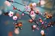 Leinwandbild Motiv Spring flowering Japanese tree Sakura