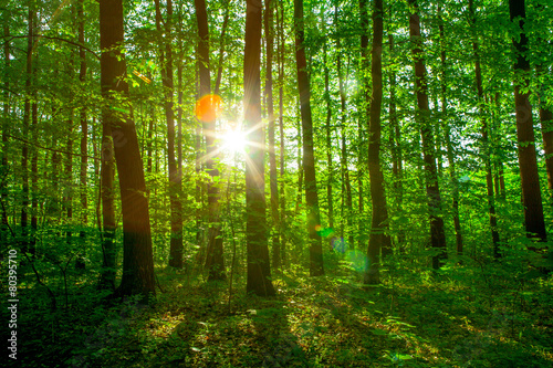 Photo Stands Road in forest sun