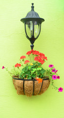 Colorful hanging flower