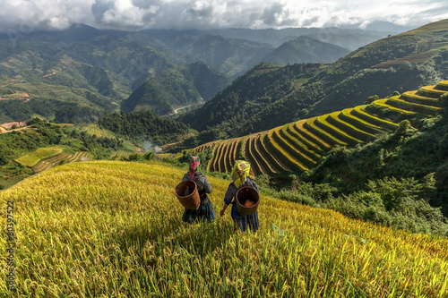 Foto auf Gartenposter Reisfelder Rice fields on terraced of Mu Cang Chai, YenBai, Vietnam.