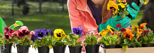 Tuinposter Pansies Colorful pansy flowers