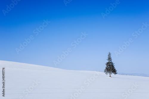Fotografie, Obraz  美瑛クリスマスツリーの木
