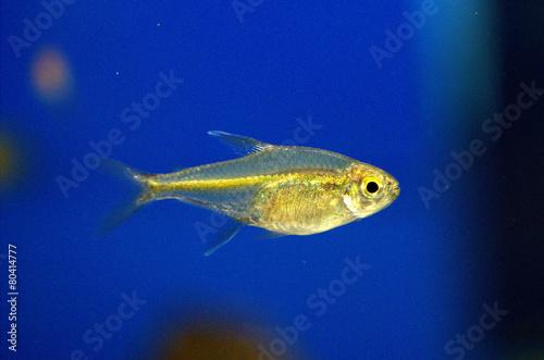 Fotografía  Fish