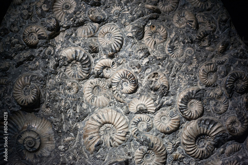 Fossilized Shell Canvas Print