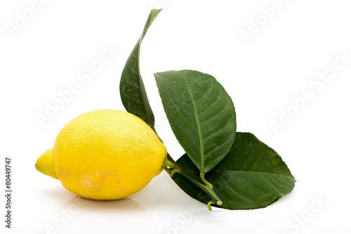 Valokuva  Citron feuilles
