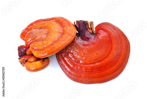 Photo  Lingzhi Mushroom Ganoderma Lucidum Isolated on white background