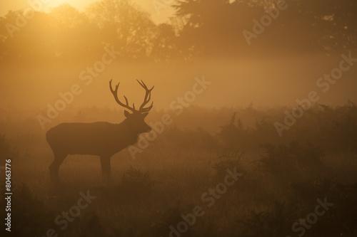 Garden Poster Bestsellers Red deer - Cervus elaphus