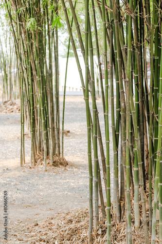 In de dag Bamboo bamboo tree
