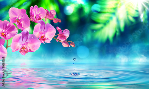 orchid in zen garden with droplet on pond Wallpaper Mural