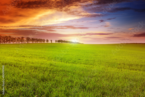 Cadres-photo bureau Miel Beautiful sunset on spring field