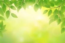 Green Beech Leaves Background, Vector Illustration