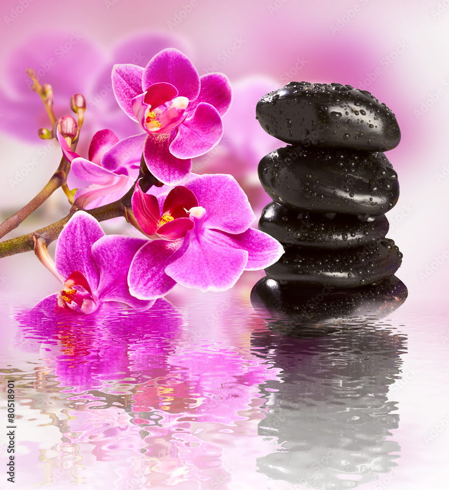 Fototapeta beautiful gorgeous orchid and wet stones