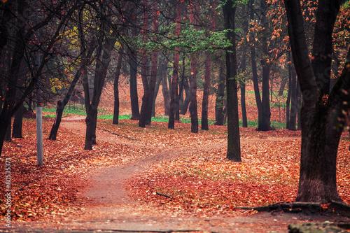 Foto op Aluminium Koraal autumn park