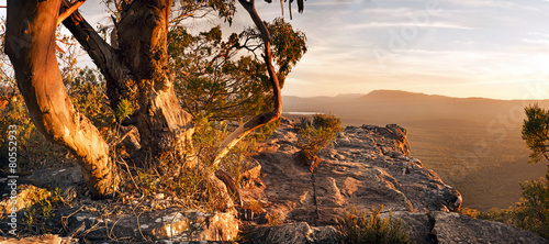Printed kitchen splashbacks Australia Australian Bush Landscape